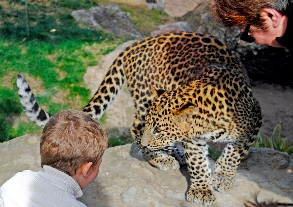 bioparc-valencia-familia-observando-al-leopardo